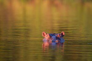 Gavin Opie Safaris