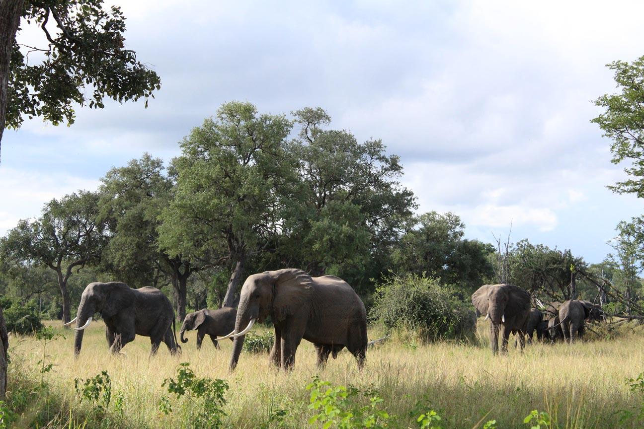 jackalberry safaris green season safari elephants - When is the best time of year to safari in Zambia?