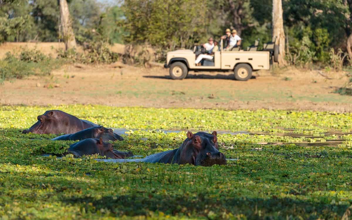 Afternoon game drive, Gavin Opie Safaris